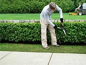 entretien de jardin ©freeimage