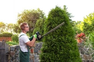 taille et élagage jardin