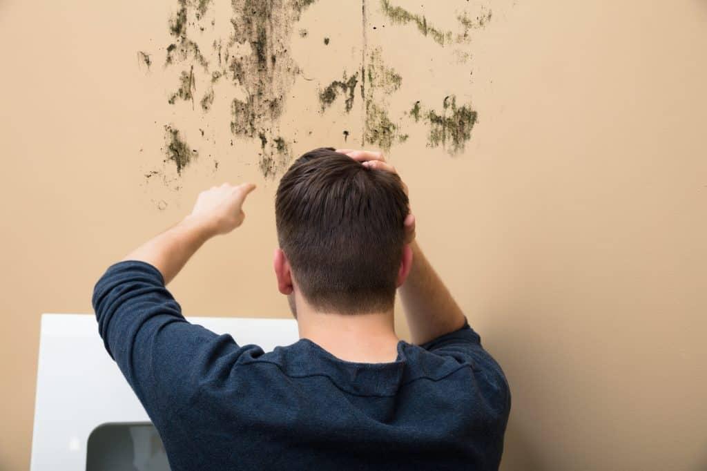 l'intervention d'un professionnel contre humidité