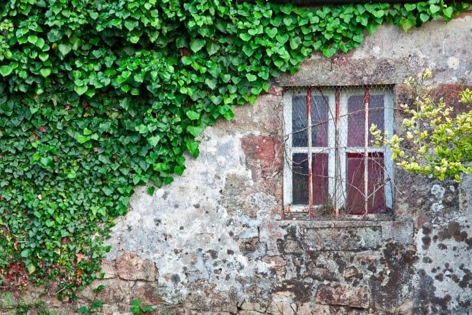 fenêtre recouverte ©stockvault