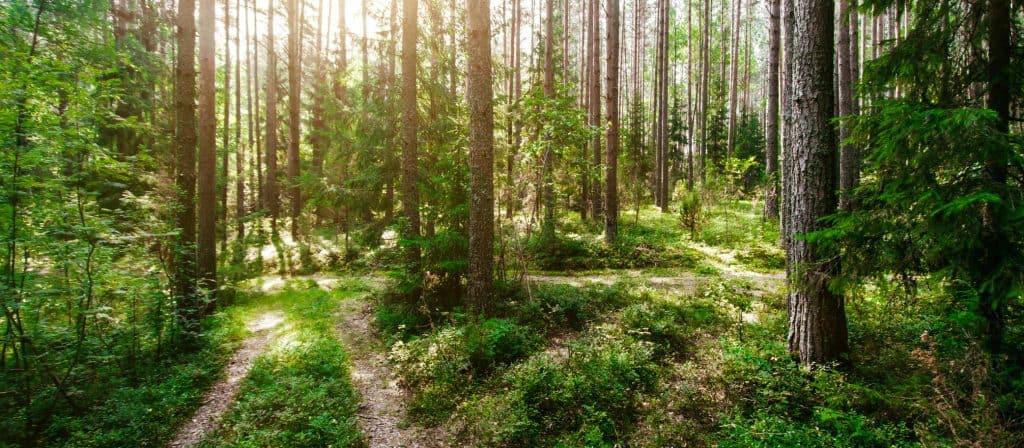 prix de la transplantation d'arbres