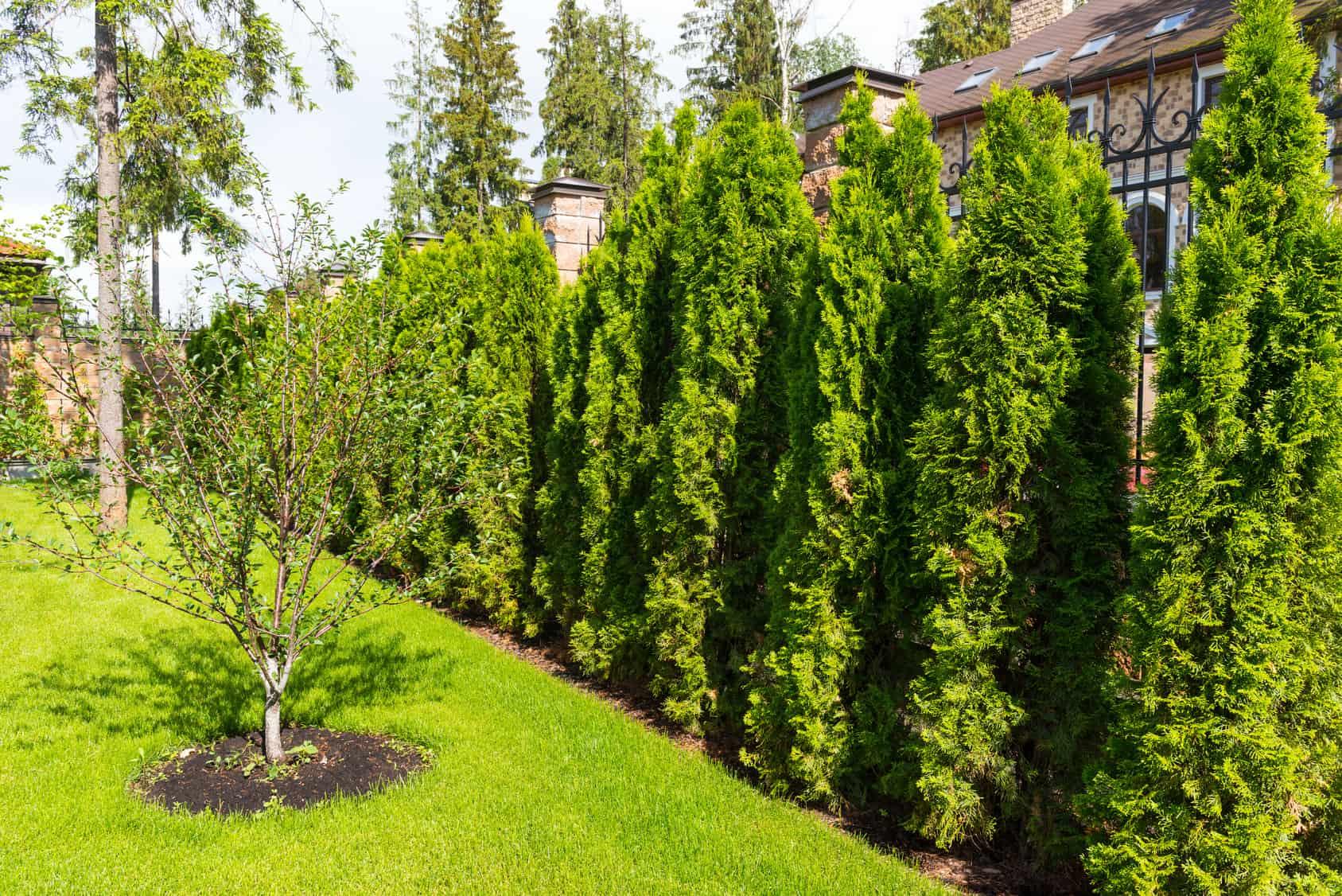 Devis entretien de jardin: quel prestataire choisir?