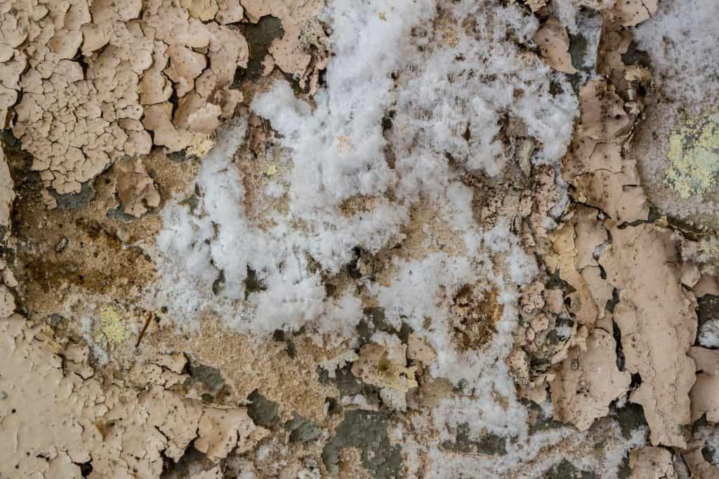 Pourquoi procéder au traitement des champignons des maisons?