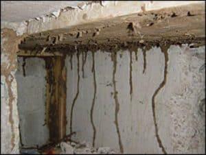 Quand faire un traitement des termites?